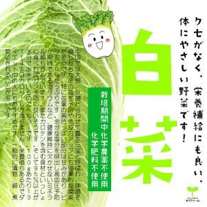 白菜 栽培期間中化学農薬不使用 1/4カット ※葉を数枚とって洗浄してから出荷をするため、傷んでいる箇所がある可能性があります。