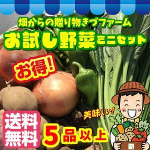 【送料無料 (通常宅配便限定) 】 お試し野菜ミニセット 5品!(お試し野菜セットより品数が少ないセットになります)|kizufarm