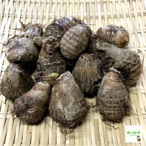 【送料無料 (通常宅配便限定) 】 お試し野菜ミニセット 5品!(お試し野菜セットより品数が少ないセットになります)|kizufarm|02