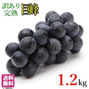 訳あり 種なし 朝どれ ぶどう 巨峰  長野県産 3キロ レビューを書いたら200円クーポン