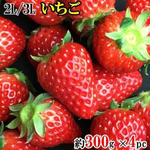 送料無料! いちご 章姫または紅ほっぺ 2L/3L 300g×4パック