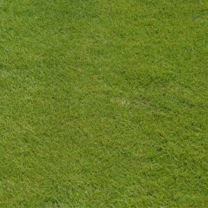 高麗芝マット(こうらいしば)【1ロール(約0.5平米)】天然芝 芝生 ロール芝 夏芝|kkb-green|03