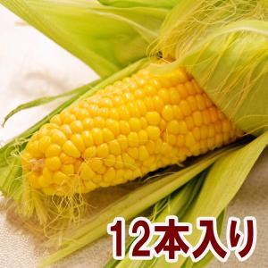 鴨志田さんのフルーツとうもろこし 2Lサイズ12本 産地直送...