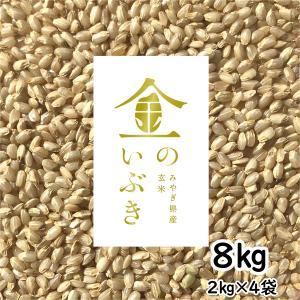 宮城産 金のいぶき 8kg(2kg×4) 令和元年産 胚芽が3倍大きい玄米食専用米