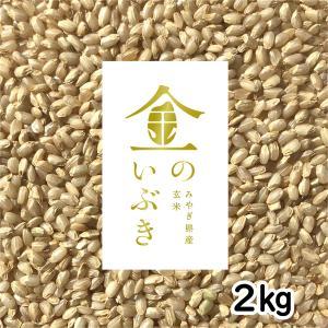 宮城県 金のいぶき 2kg 令和元年産 胚芽が3倍大きい玄米食専用米