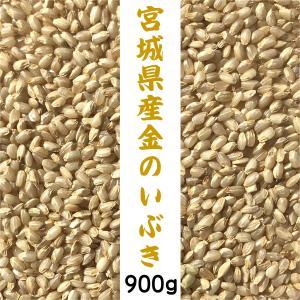 宮城県 金のいぶき 900g 送料無料 お試し 胚芽が3倍大きい玄米食専用米