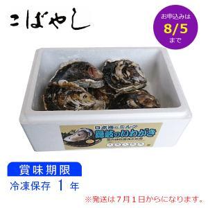 送料無料 御中元 隠岐のいわがき プロントン凍結 Lサイズ 7個入 山陰 贈り物|kobayashigift