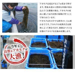 あかもく アカモク ぎばさ ギバサ 愛媛県産 1kg (500g×2P)  海藻 健康食品 スーパーフード 冷凍 魚 海産物|kobecrab|05