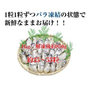 広島産 かき カキ 牡蠣 貝類 むき身 1kg 広島県産 カキフライ 鍋|kobecrab|03