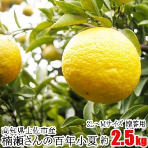 【贈答用】楠瀬さんの百年小夏 2L〜M/2.5kg(日向夏・ニューサマーオレンジ)|kochi-bussan