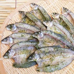 青のり鮎一夜干し10尾セット|kochi-bussan