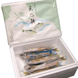 天然あゆ(友釣り・冷凍) 500g|kochi-bussan