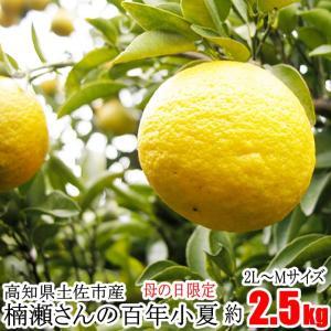 ゆうパック限定!送料込み!【母の日限定】楠瀬さんの百年小夏 2L〜M/2.5kg|kochi-bussan