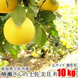 【贈答用】楠瀬さんの土佐文旦 3L/10kg|kochi-bussan