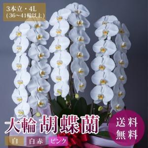 胡蝶蘭 コチョウラン 開店祝い 開院 誕生日 昇進祝い お供え ギフト 3本立 4Lサイズ