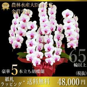胡蝶蘭 5本立ち 大輪 65輪以上 開店祝い 還暦祝い お祝い
