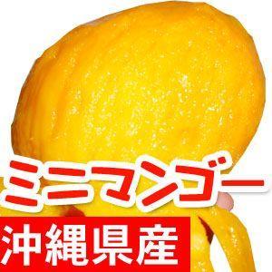 ご家庭用 沖縄県産ミニマンゴー500g 4〜13個入 送料無...