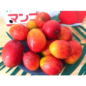 ご家庭用 沖縄県産ミニマンゴー1kg 8〜26個入 送料無料...