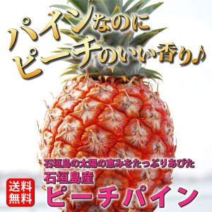 送料無料 石垣島産 ピーチパイン Sサイズ 700g〜1kg 3個入り 大城農園|kodawariokinawa