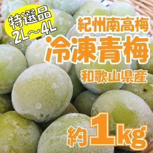 紀州南高梅 冷凍青梅 特選品 約1kg(大玉2L〜4L) 産地直送 和歌山 取り寄せ シロップ・梅酒専用