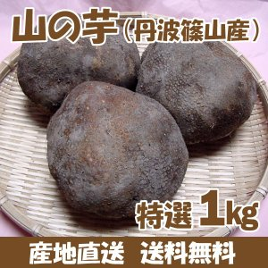 山の芋(丹波篠山産) 特選1kg(3〜4個) 箱入り 取り寄せ 産地直送 とろろ(送料無料)