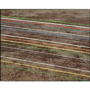 ラインロープ 6mm×200m巻 よく売れるサイズです 色をお選びください ひも 陸上 カラー|kodomor