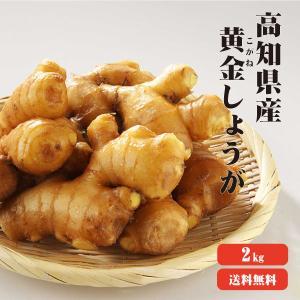 黄金しょうが 2Kg 送料無料 高知県産 黄金生姜 生姜 国産 根生姜 囲い生姜