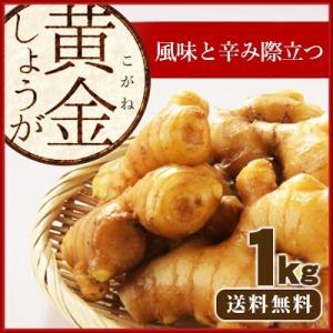 セール 高知県産 黄金しょうが 1Kg /送料無料/食用生姜/国産/産地直送/種生姜ではございません