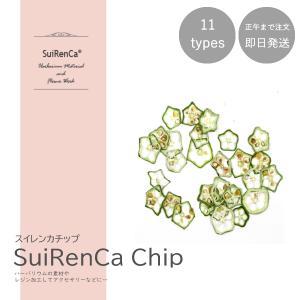 フルーツチップ 押し野菜 ドライ パーツ 素材 ハーバリウム SRCC-OK スイレンカチップ オクラ|koh5533