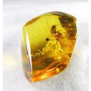 琥珀メキシコ産レインボーアンバー・虫入り(白蟻、動く気泡)琥珀裸石(中型)