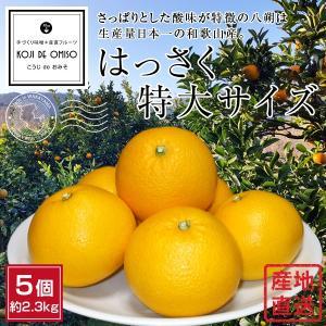 和歌山より産地直送! はっさく特大サイズ 5個 約2.5kg|koji-de-omiso