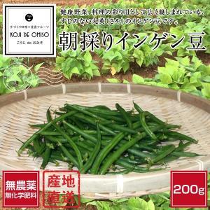 無農薬 朝採りインゲン豆(いんげん豆) 200g koji-de-omiso