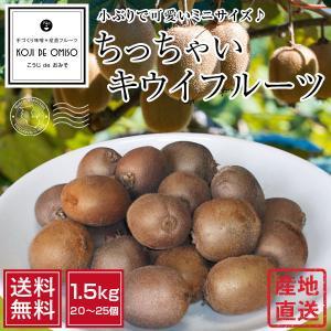 和歌山より直送! 食べ頃ちっちゃいキウイフルーツ 1.3kg [送料無料 ※北海道、沖縄は送料別途500円]|koji-de-omiso