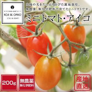 ■太陽の光をいっぱい浴びた露地栽培です。スーパーなどで売られているハウス栽培のミニトマトよりは若干皮...