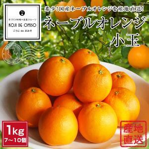 和歌山より産地直送 ネーブルオレンジ小玉7個|koji-de-omiso