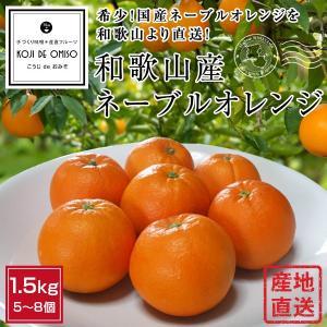 和歌山産   ネーブルオレンジ 6個|koji-de-omiso