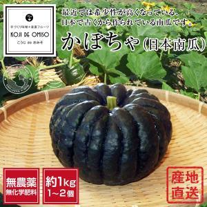 無農薬 和歌山産 かぼちゃ(日本カボチャ)  1個約1kg koji-de-omiso