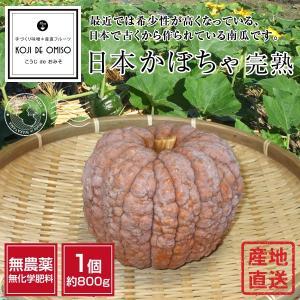 無農薬 和歌山産 日本かぼちゃ完熟  1個約800g koji-de-omiso
