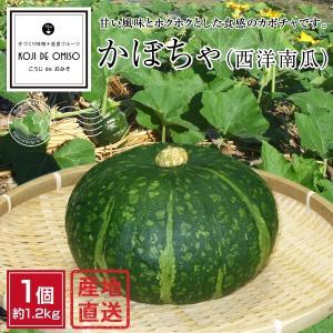産地直送!和歌山産 かぼちゃ(西洋カボチャ)  1個約1.2kg koji-de-omiso