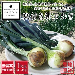 無農薬 葉付き新玉ねぎ 1kg超 koji-de-omiso