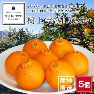 産地直送 樹上完熟 不知火・しらぬい(デコポンと同品種)5個 koji-de-omiso