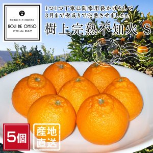 産地直送 樹上完熟 不知火・しらぬい Sサイズ(デコポンと同品種)5個 koji-de-omiso