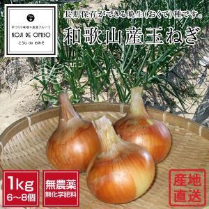 無農薬 和歌山産玉ねぎ 1kg M・Sサイズ混合 koji-de-omiso