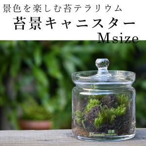【景色を楽しむ苔テラリウム】苔景キャニスター Msize