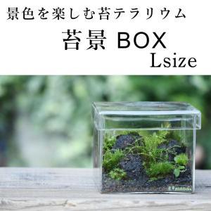 【景色を楽しむ苔テラリウム】苔景BOX Lsize
