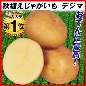 秋植えじゃがいも デジマ 2kg 種芋