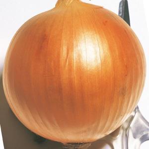 玉ねぎ苗 旨玉グルメ 100本 / 国華園|kokkaen