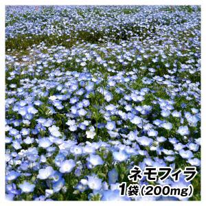 種 花たね ネモフィラ 1袋(200mg)/タネ たね