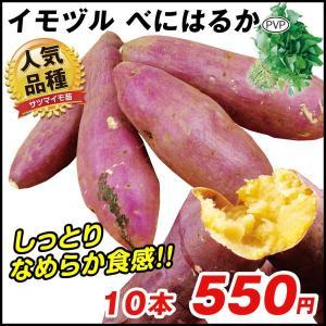 イモヅル(芋づる) べにはるかPイモヅル 10本 / さつまいも サツマイモ 苗 挿し穂 薩摩芋 サ...