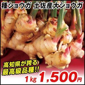 ショウガ 種芋 土佐産大ショウガ 1kg / 種生姜 生姜 種芋 種いも タネイモ ジンジャー 家庭...